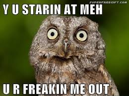 Funny Owl Meme - 36 best wise owl memes images on pinterest funny animals