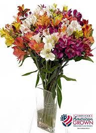 Alstroemeria Amazon Com American Grown Alstroemeria Fresh Cut Flowers