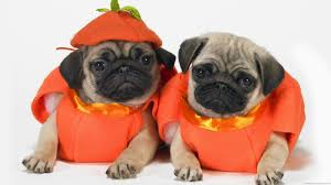Scary Halloween Animals by Cute And Funny Pictures Of Animals 73 Halloween Pictures