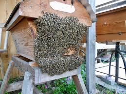 ventilation it u0027s complicated keeping backyard bees