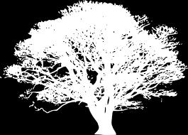 white tree white tree hi absolute economical funeral home serving oklahoma