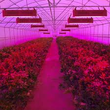 full spectrum light for plants plants grown with led grow lights awesome house lighting