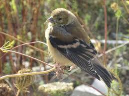 Backyard Wild Birds by Hand Tame Wild Birds Feed The Old Farmer U0027s Almanac