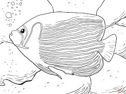 emperor angelfish coloring page free printable coloring pages