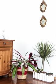 tips for beautiful healthy indoor plants the slow pace