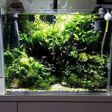 Aquascaping Plants Marcus Spaull Marcusspaull Instagram Photos And Videos