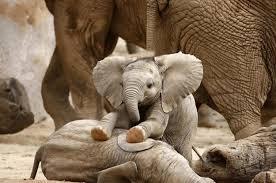 Elephant Meme - 17 baby elephants learning how to use their trunks