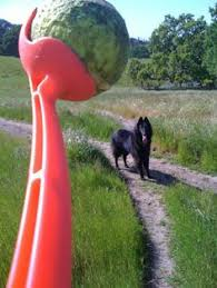 belgian sheepdog pros and cons belgian shepherd pretty i want one of these i like dreaming