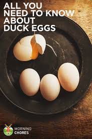 all you need to know about duck eggs u2014 nutrition benefits