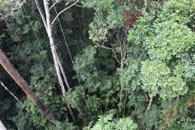 canopy amazon take an amazon rainforest canopy walk confetti travel cafe