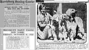 afghan hound breeders new york afghan hound times miss jean manson and cove afghan hounds by