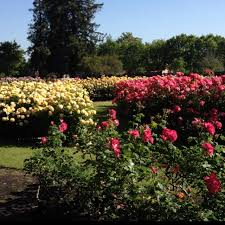 58 best rose gardens images on pinterest flowers beautiful