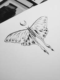 171 best luna moth images on pinterest drawing butterflies and