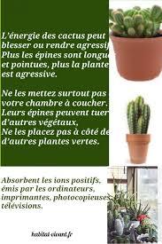 plantes dépolluantes chambre à coucher le cactus plante amie ou ennemie feng shui maison le cactus et