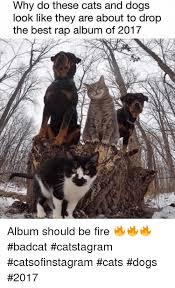 Cat And Dog Memes - why do these cats and dogs look like they are about to drop the best