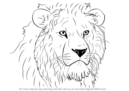 learn draw lion head big cats step step drawing