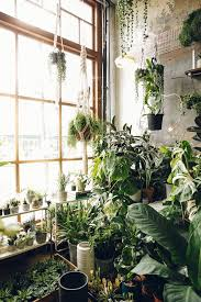 room with plants haarkon india and magnus green lover india lovers and plants