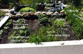 Rock Vegetable Garden Growing Vegetables From Seed Piglet In Portugal