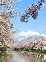 cherry blossom tree file cherry blossom tree and mount iwaki hirosaki japan jpg