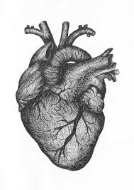 real heart sketch cliparts co