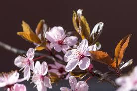 fruit trees in garden design u2013 ideas for planting fruit trees in