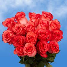 global roses bright coral roses global