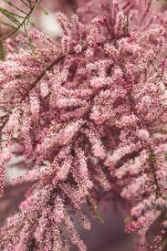free stock photos of botany pexels