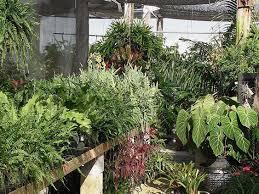 native plant nursery mama u0027s garden center and plant nursery about usmama u0027s garden center