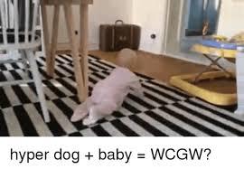Hyper Dog Meme - q hyper dog baby wcgw baby it s cold outside meme on esmemes com