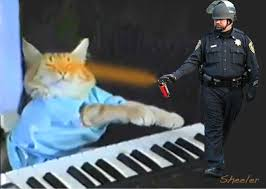 Keyboard Cat Meme - gallery pepper spray cop squirts internet in the eye wired