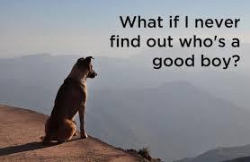 Philosophical Memes - philosophical dog meme anyone imgur