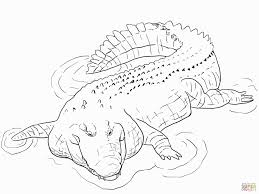 nice idea crocodile coloring pages to print hunter pokemon baby
