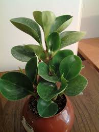 top house plants defining a style series house plant redesigns your home with