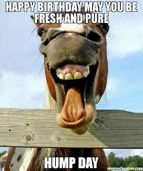 Hump Day Meme Funny - happy birthday may you be fresh and pure hump day meme funny horse