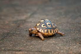 tortoise bird light wind