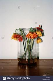 Flowers In A Vase Images Wilting Flowers In A Vase Stock Photo Royalty Free Image