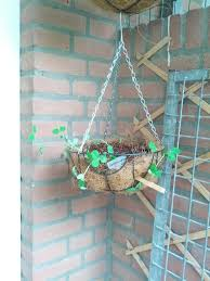 Best Vegetables For Small Garden by Hanging Vegetable Plants U2013 Vegetables That Grow In Hanging Baskets