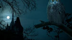 halloween phone background halloween night owl hounted wallpapers hd 4k high definition