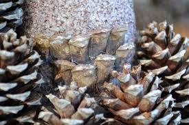 pine cone christmas tree worldview de mama