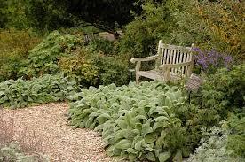 ground cover ideas basic gardening birds u0026 blooms