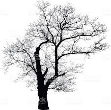 leafless tree shape stock vector 530581378 istock