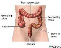 Challenge Procedure The Colon Or Large Intestine The Challenge And Goal Of Sedation In