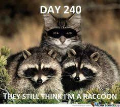 Racoon Meme - meme clipart