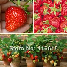 online get cheap strawberry pieces aliexpress com alibaba group