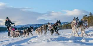 dog sledding in geilo with fagerlund husky fjord tours