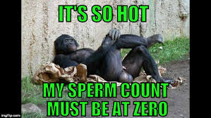 Gorilla Memes - big balls gorilla meme generator imgflip