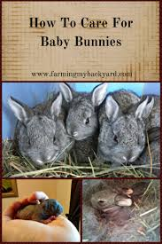 how to care for baby bunnies farming my backyard