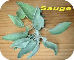 sauge en cuisine dictionnaire de cuisine et gastronomie sauge