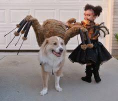 Spider Dog Halloween Costume Spider Dog Terrier Fancy Dress