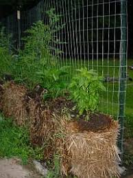 Horse Manure Vegetable Garden by Strawbale Gardening